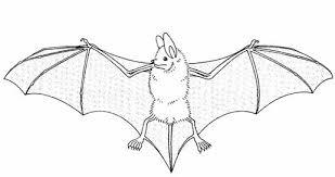 vleermuis tekening